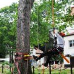 Baumfällarbeiten mit Klettertechnik