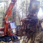 Baumfällarbeiten und Wurzelrodung